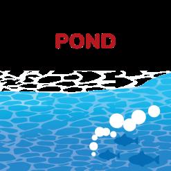 Pond food